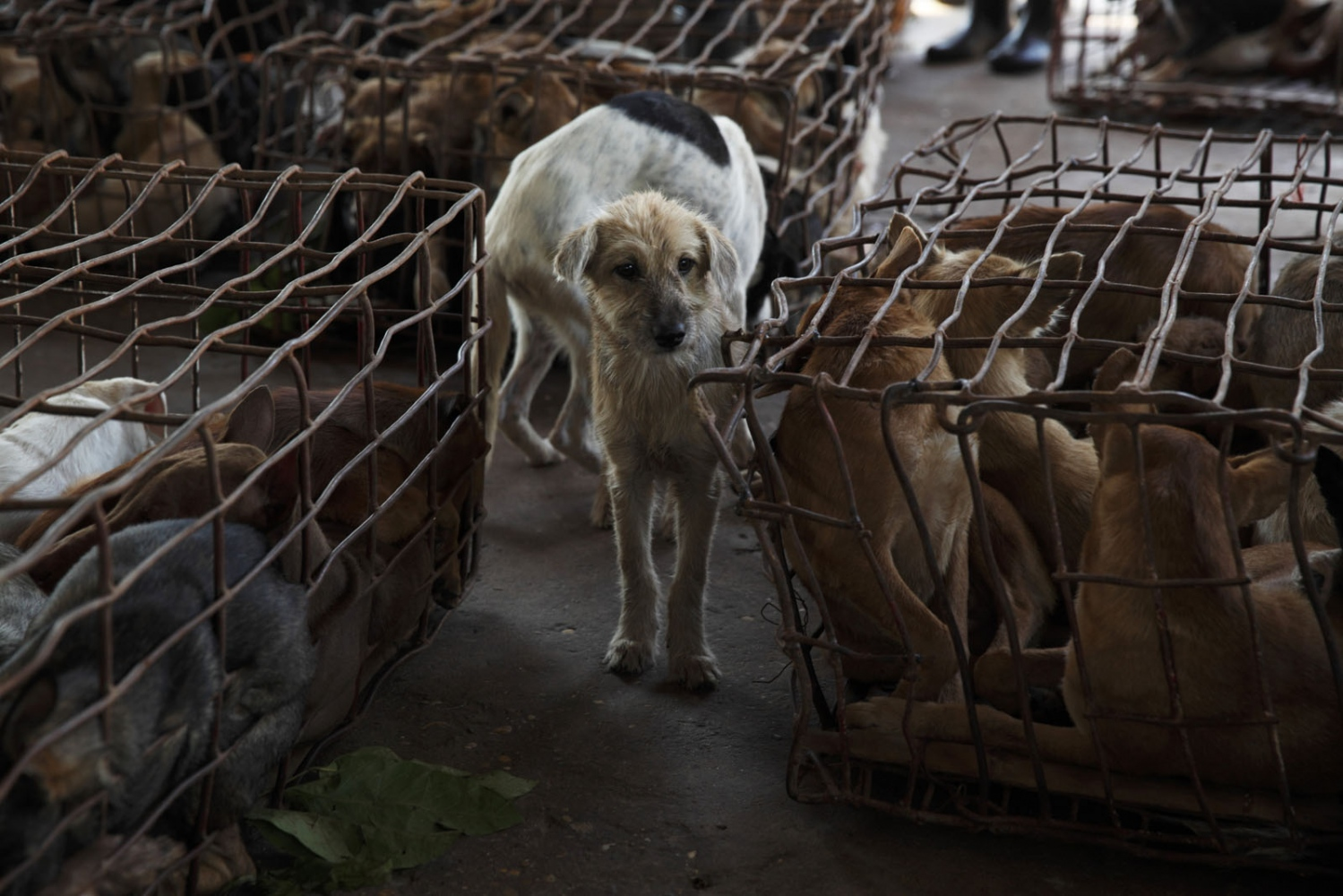 Art and Documentary Photography - Loading Dog_Meat24.JPG