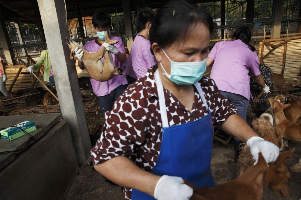 Staff members of the Nakohon Phanom Dog Shelter remove the dogs that have already died to be desposed of. Nakhon Phanom, Thailand