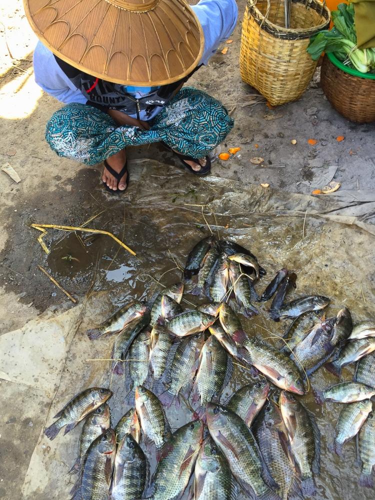 Art and Documentary Photography - Loading 20150214_Burma_2015_0195.jpg