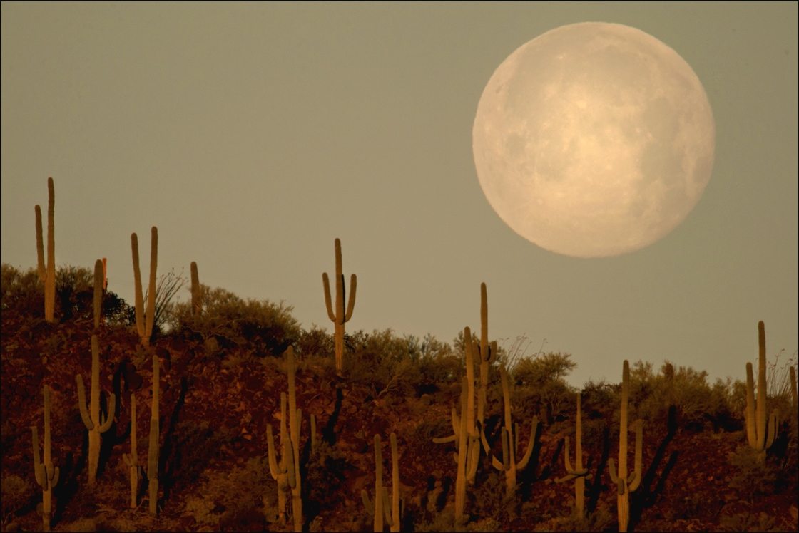Full moon setting at dawn, Sonora Desert, Tucson, Arizona. April 2014.