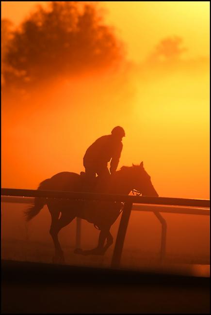 Cold morning workout, horse racing farm. Florida