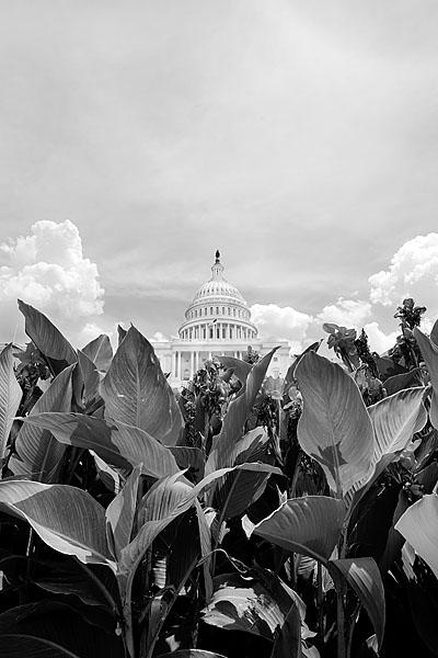 Art and Documentary Photography - Loading 1208030005_WASHINGTON_DC.jpg
