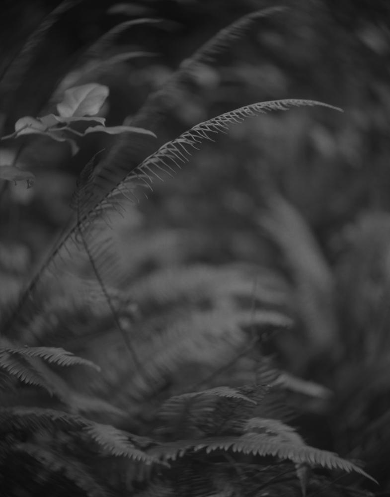 Art and Documentary Photography - Loading Kevin-J-Mellis-PhotoEd-001.jpg