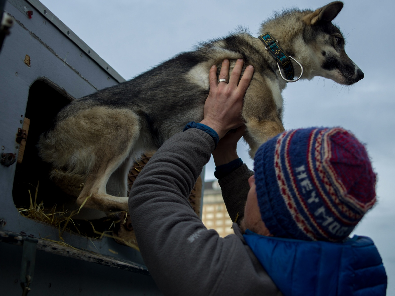 Andrew Pace, husband to Iditarod musher Kristin Pace, pulls a dog from their trialer at the ceremonial Iditarod start in Anchorage on March 5, 2016. Together Andrew and Kristin run Hey Moose! Kennel in Healy, Alaska. Andrew also mushes dogs and was a 2016 finisher in the Yukon Quest.