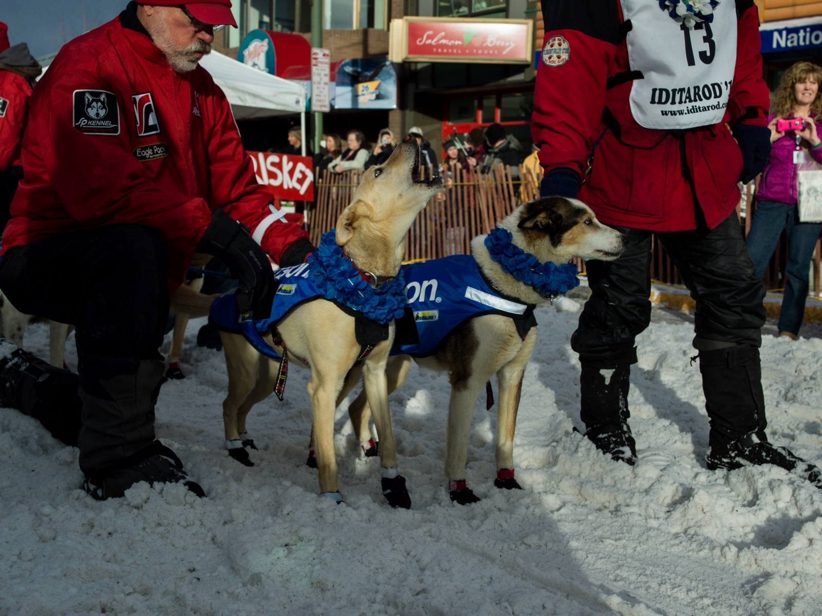 Aily Zirkle pets one of her lead dogs before heading for the start line of the ceremonial Iditarod start in Anchorage on March 5, 2016.