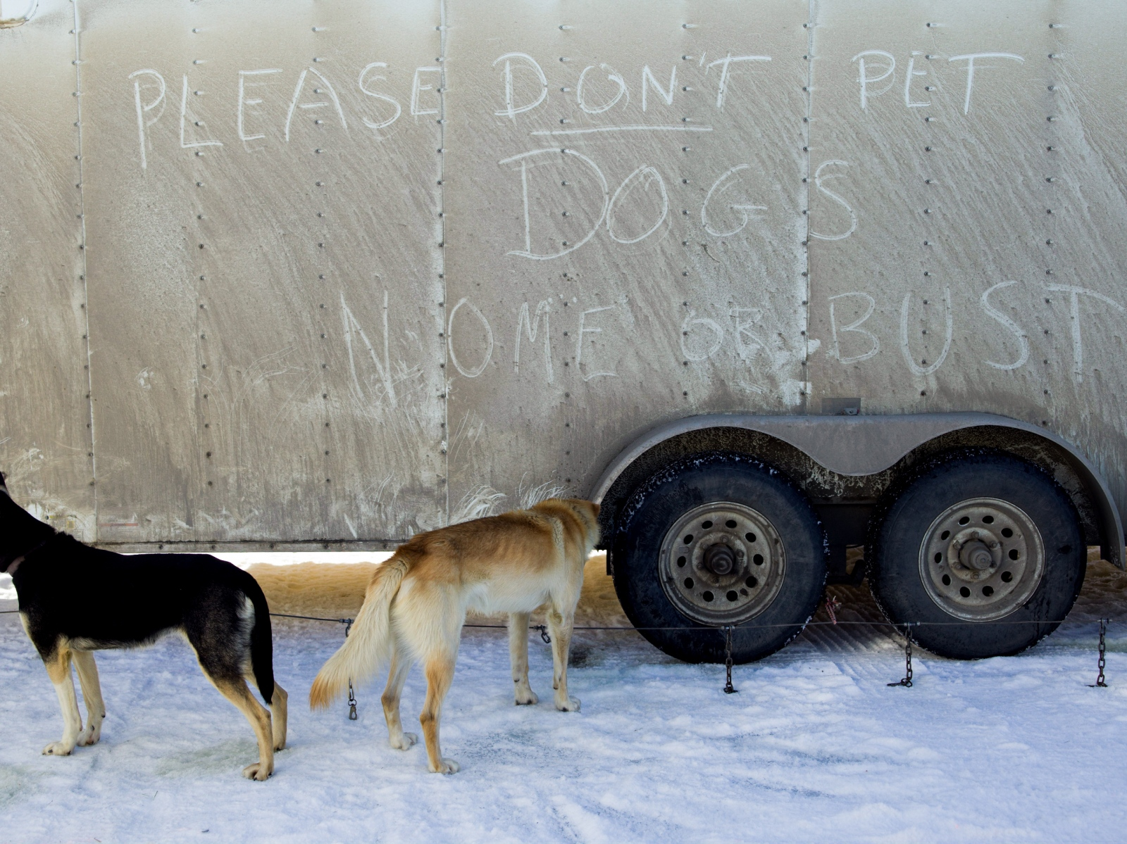 Dog trailer at the 2016 Iditarod restart in Willow, Alaska on March 6, 2016.