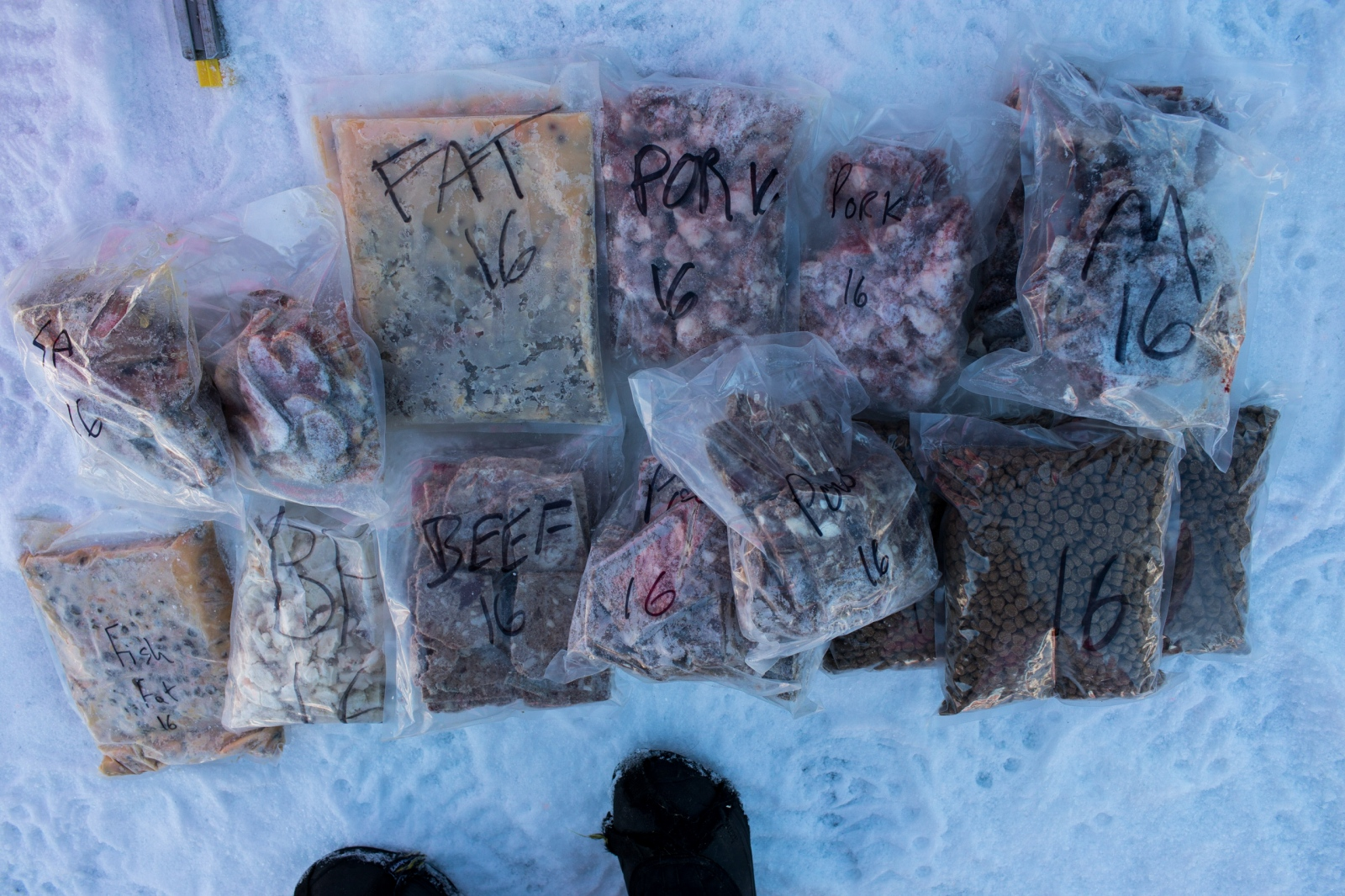 A handler lays out food for DeeDee Jonrowe's dog team at the 2016 Iditarod restart in Willow, Alaska on March 6, 2016.