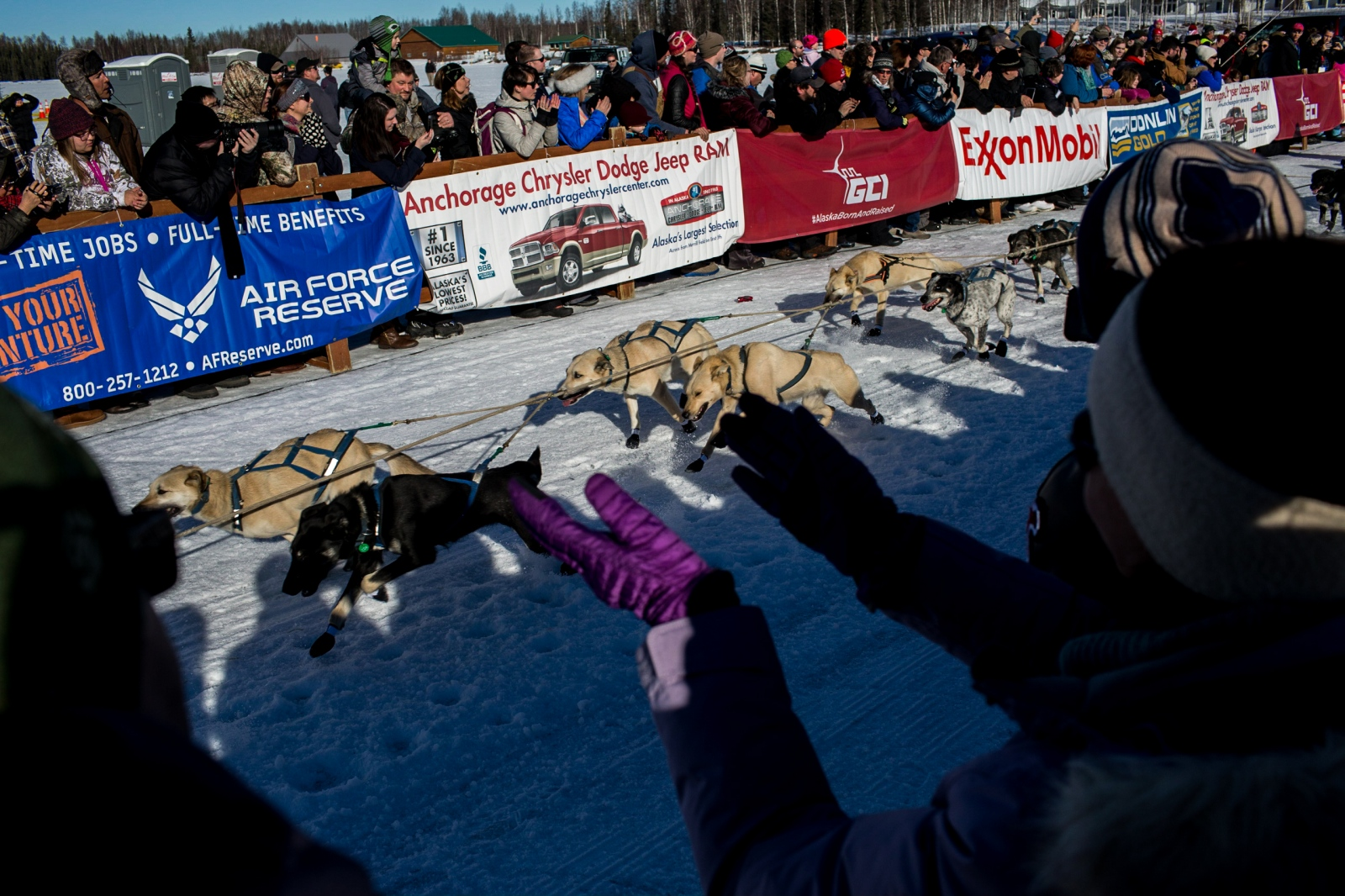 Fans cheer as a mushing team run past at the 2016 Iditarod restart in Willow, Alaska on March 6, 2016.
