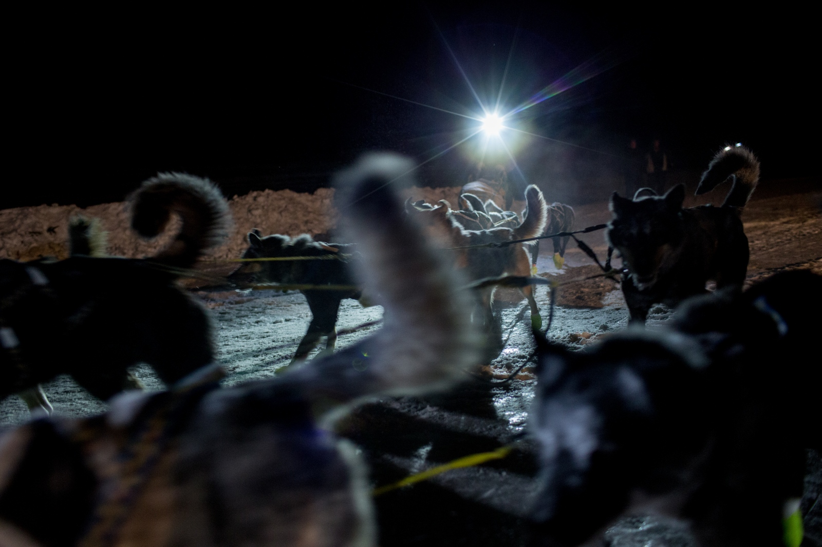 Iditarod musher Brent Sass arrives with his team in Unalakleet on March 12, 2016. Brent was the first to arrive at the checkpoint of the 85 competing dog sled teams.