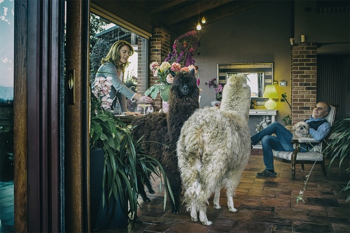 Monica and her husbandlive with alpacas in Mondovi, Italy. They have lots of open space to roam.