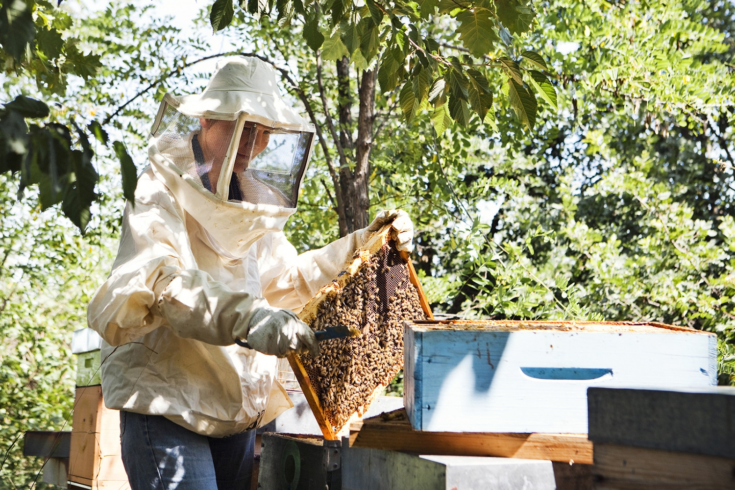 beekeeper in Damanhur, North of Italy