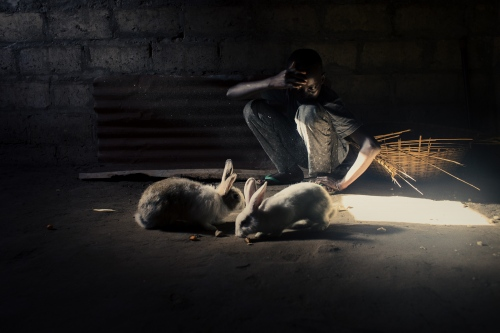 A boy playing with rabbits in his house.