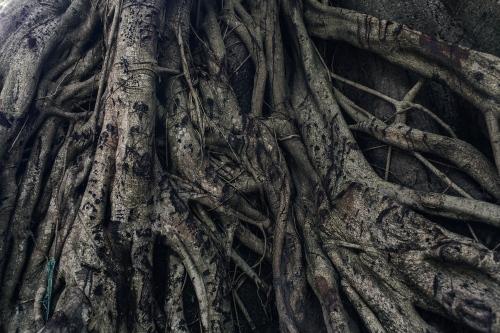 A holy tree.