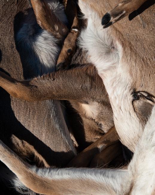 Photography image - Loading KUO_LINDA_Animalia-1.jpg