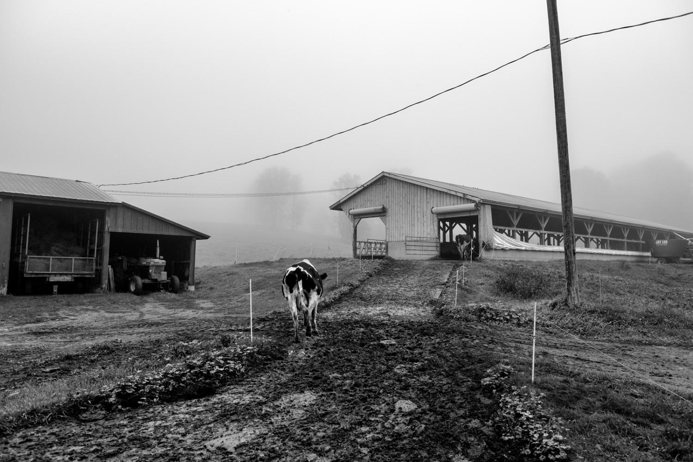 Art and Documentary Photography - Loading DSCF1834.jpg