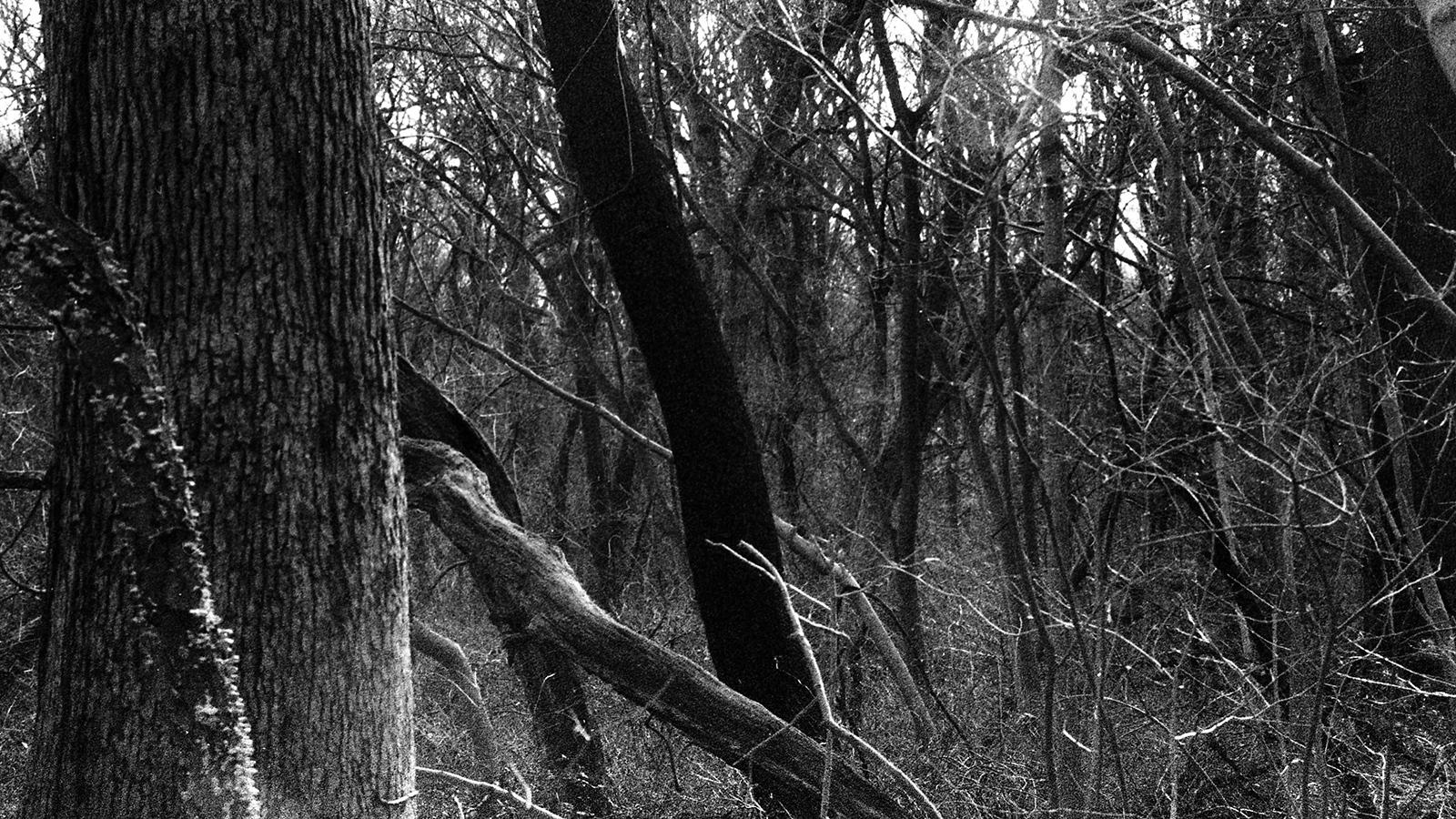 Art and Documentary Photography - Loading tree014.jpg