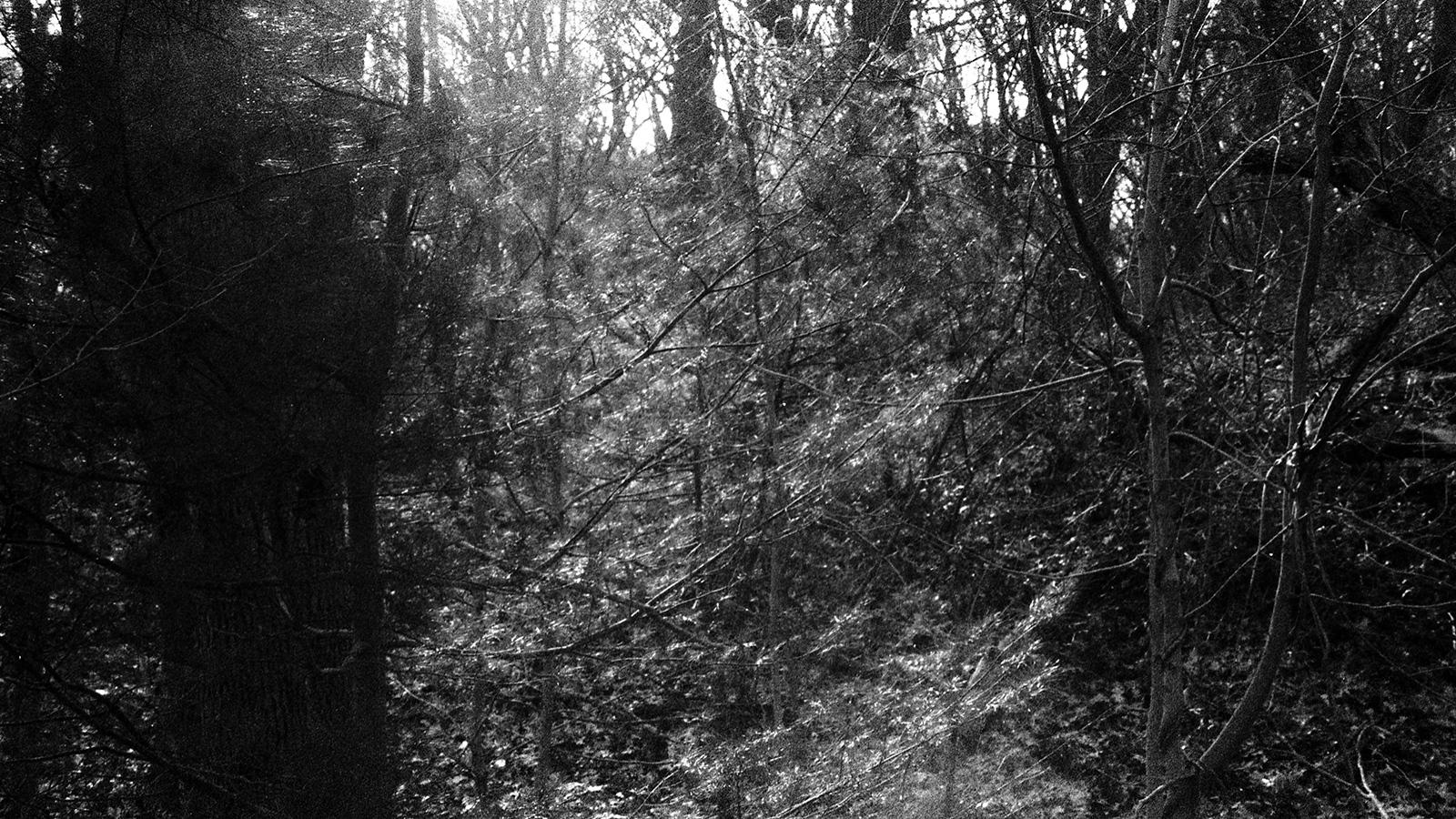Art and Documentary Photography - Loading tree020.jpg