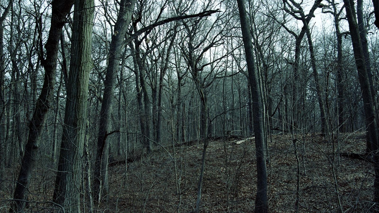 Art and Documentary Photography - Loading tree059.jpg