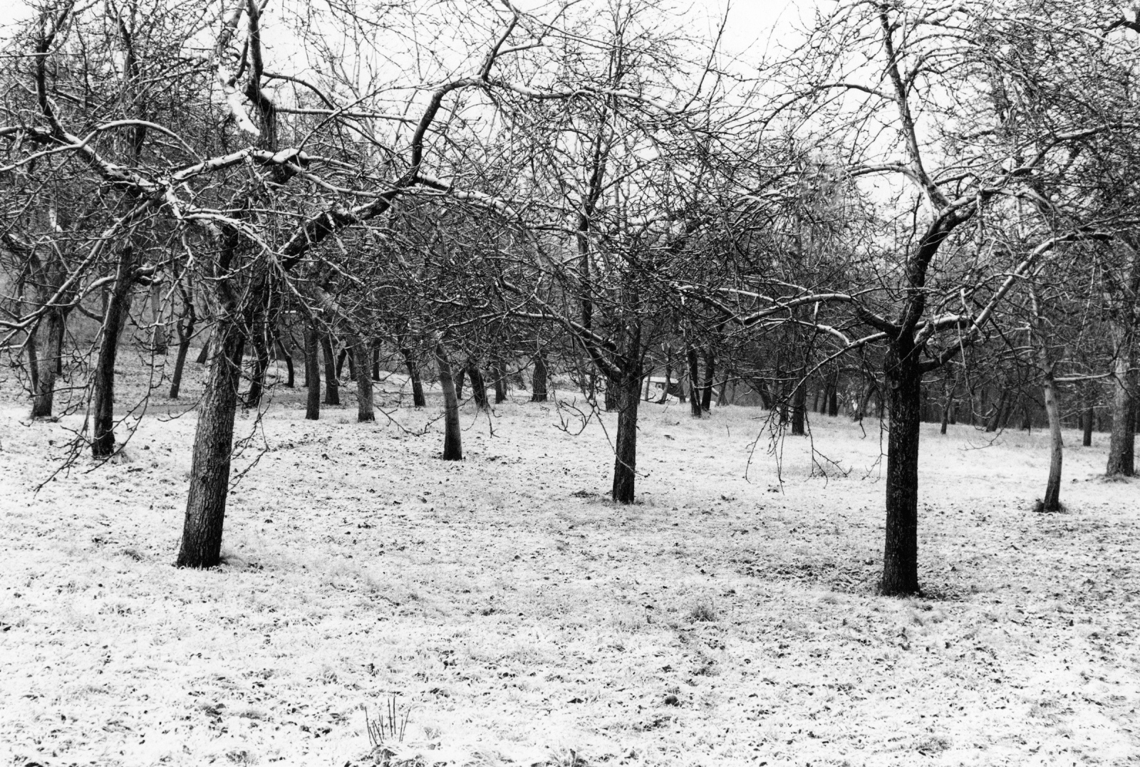 Art and Documentary Photography - Loading trees_snow.jpg