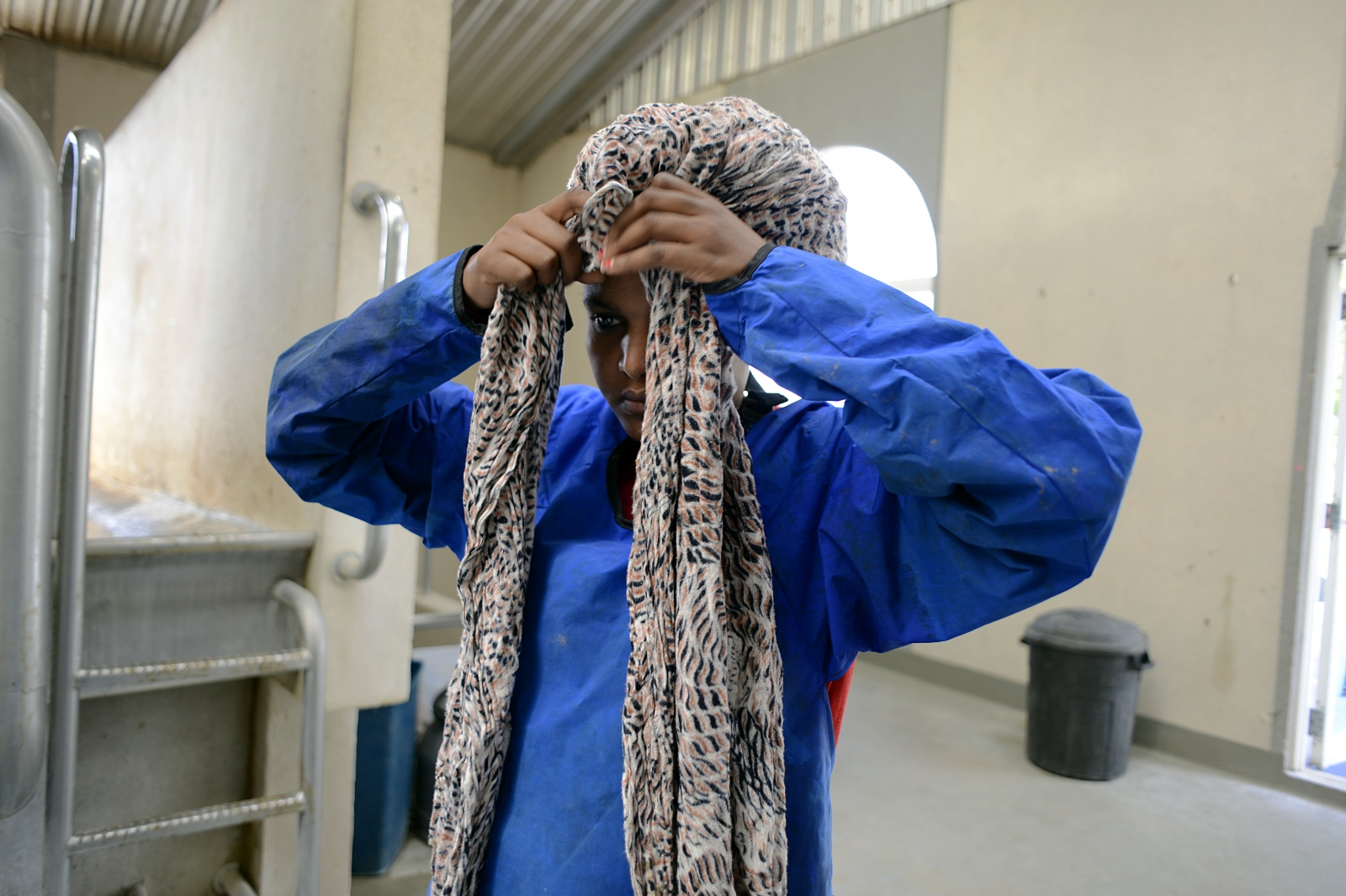 Semhar wraps a head scarf around her hair for protection while milking cows.