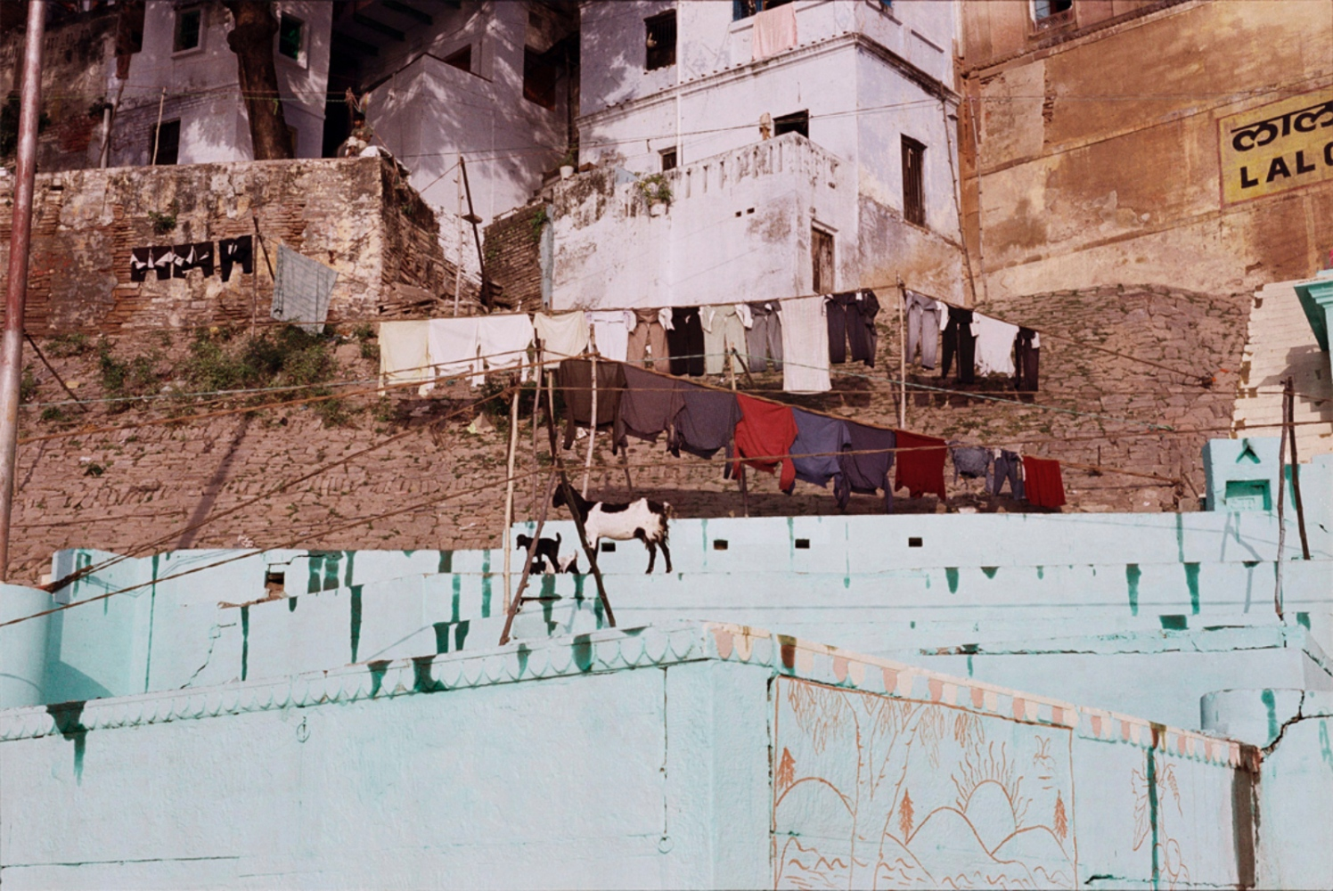 Goat and Laundry, Varanasi, India, November 2003