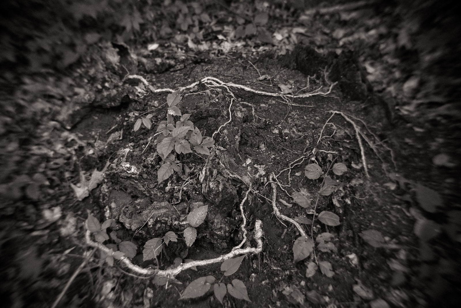 Art and Documentary Photography - Loading Roots_copy.jpg