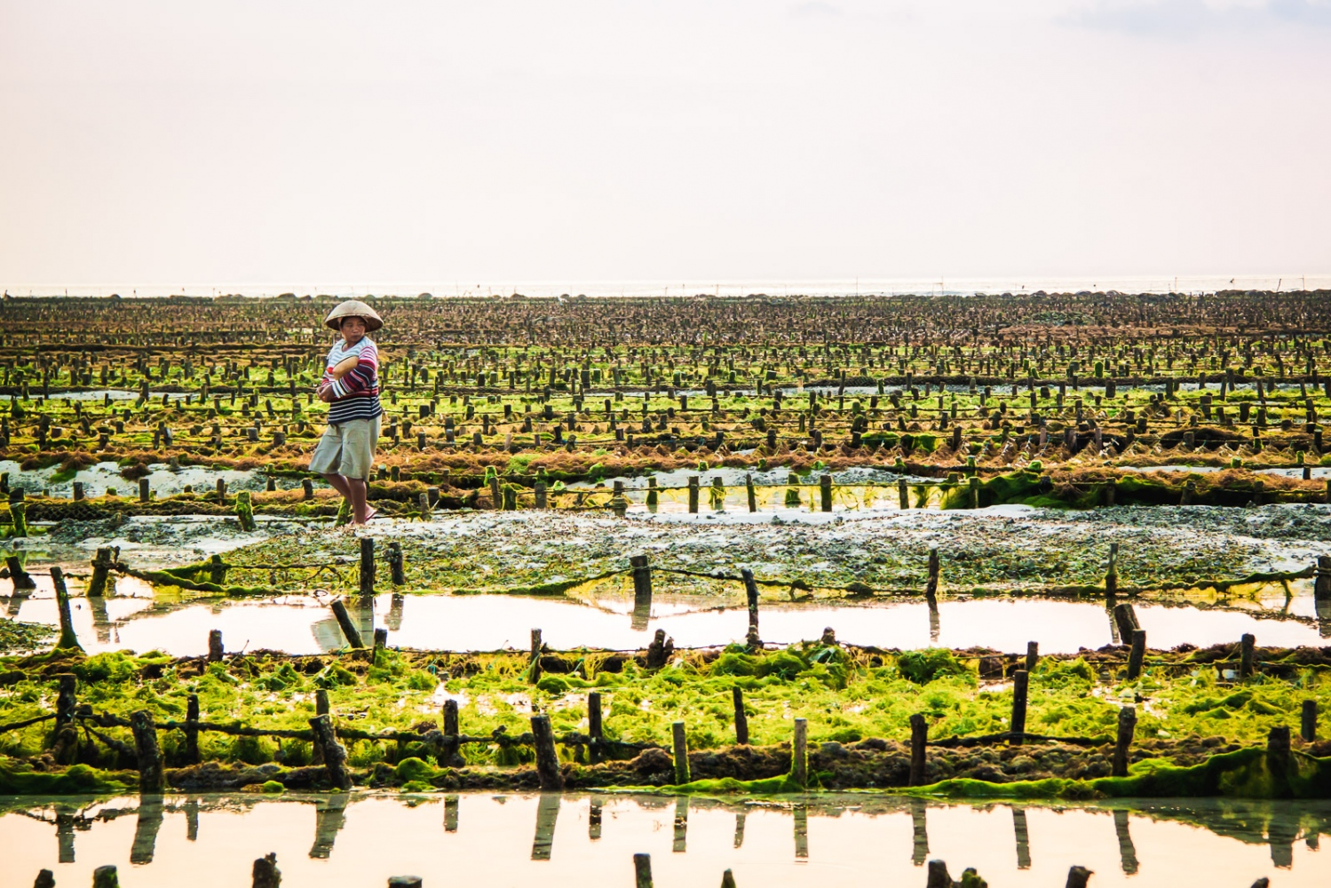 Nusa Lembongan, INDONESIA, August 13, 2011: A female farmer walks along sea weed plantations. Sea weed agriculture is one of the biggest sources of income for the inhabitants of the small island close to Bali. The seaweed is primarily being sold to the Japanese, who use it to create expensive beauty products.