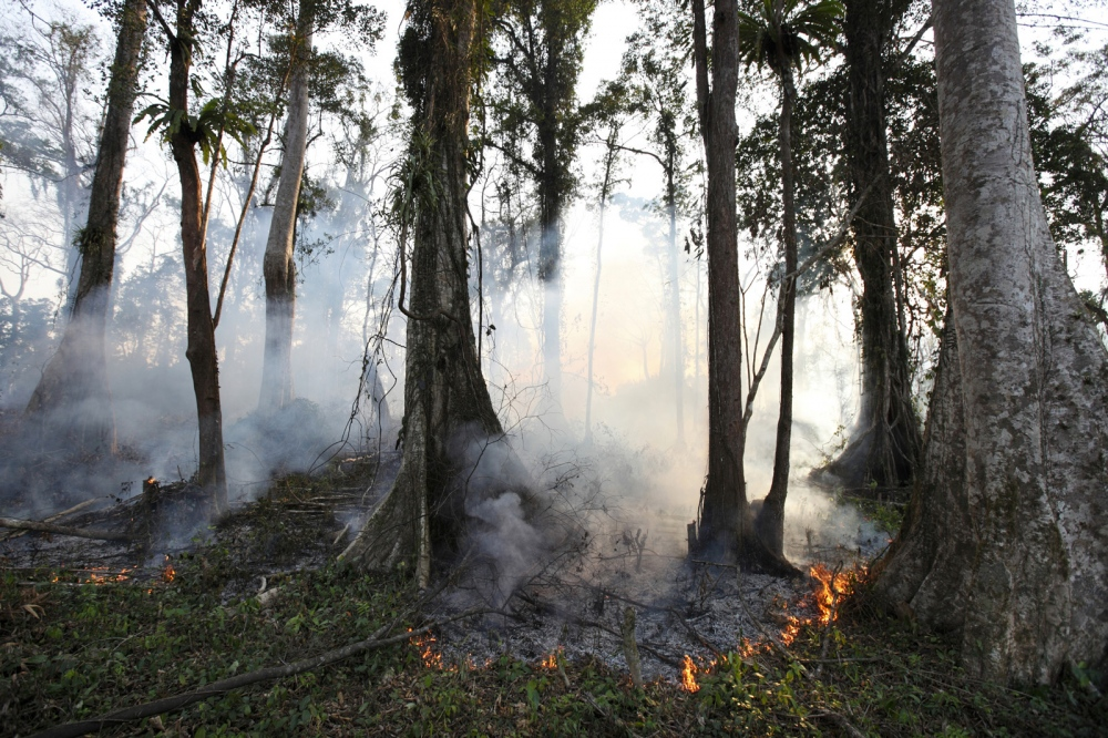 A large area of forest is logged and burnt down to make way for a banana plantation. Such actions are often encouraged by a poorly implemented Government project to give people land titles has led to massive deforestation as people claim areas of forest as their own land.
