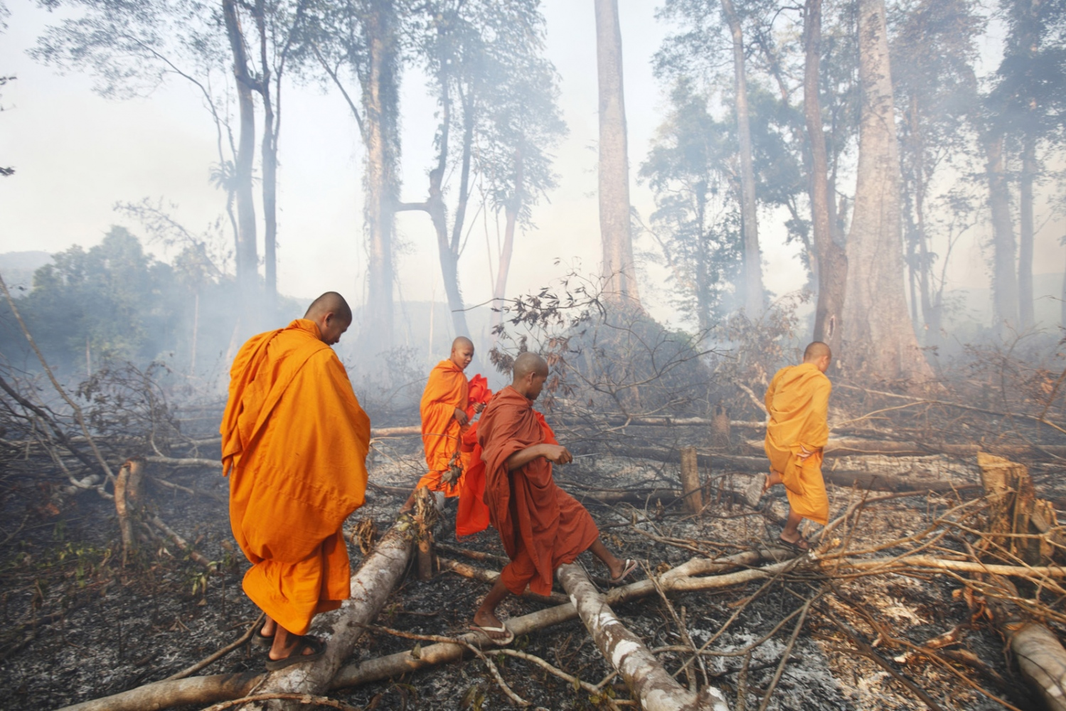 Cambodian Buddhist monks walk through a burning forest. Following uncontrolled forest destruction in the Central Cardamom Protected Forest (CCPF) an eco-warrior monk movement has begun whereby monks and villagers try to protect areas of forest by blessing trees to deter would-be loggers. This was the first tree ordination in a forest area on the edge of Ta Tay Leu village that has just been cleared to make-way for a banana plantation. Whilst they were too late to save the smaller trees they were able to bless and tie orange material around the remaining large trees.