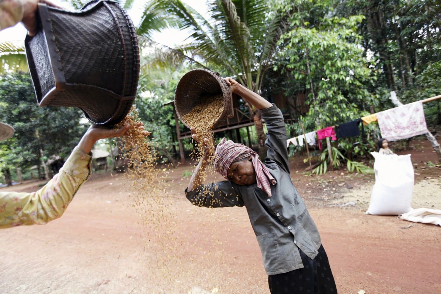Local women clean rice by allowing the wind to blow away the husks in the Areng Valley of Koh Kong Province.