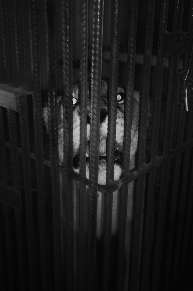Art and Documentary Photography - Loading pongo-uncanny-11.jpg