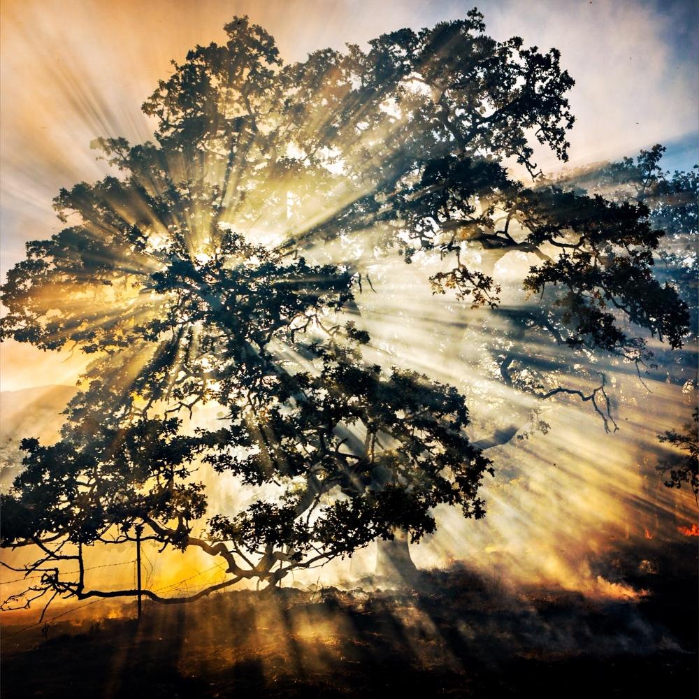 Art and Documentary Photography - Loading 332_20151001.jpg
