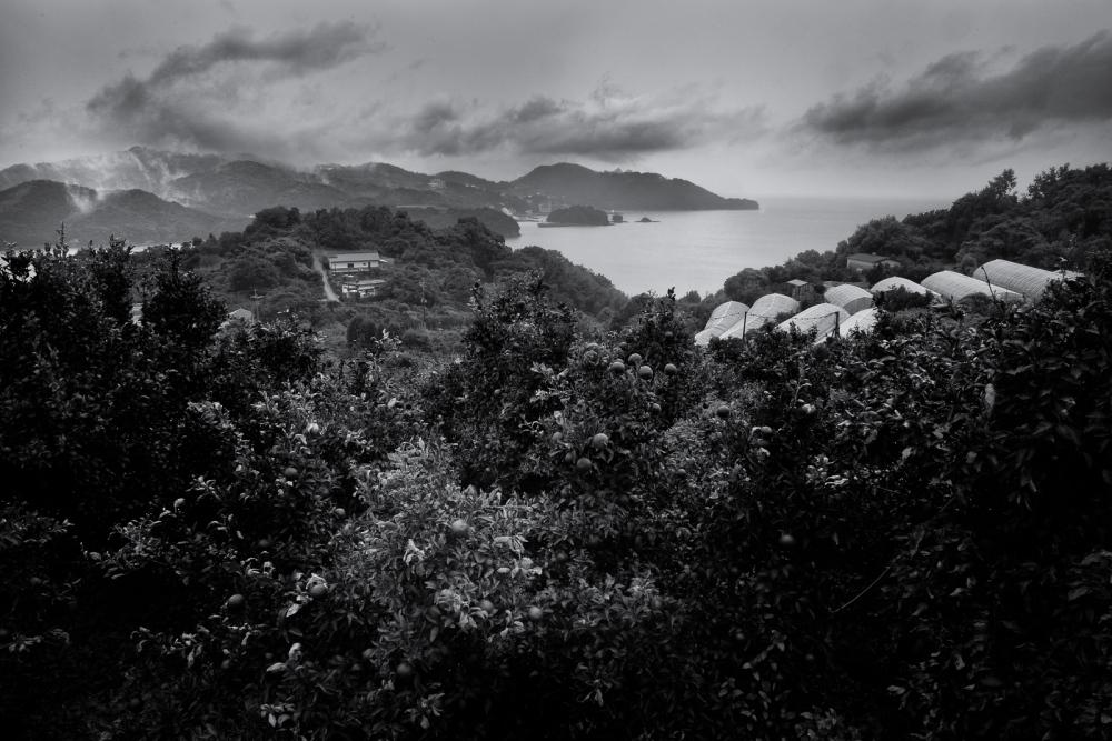 Photography image - Loading Minamata-1067.jpg