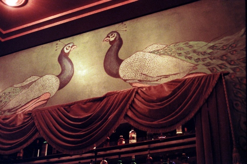 Two peacocks above the bar, New York, NY