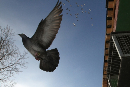 Doves In The City
