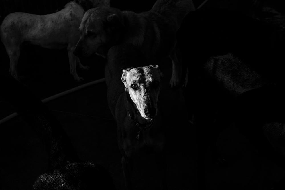 Photography image - Loading 1_david_arribas_cicatrices_scars.jpg