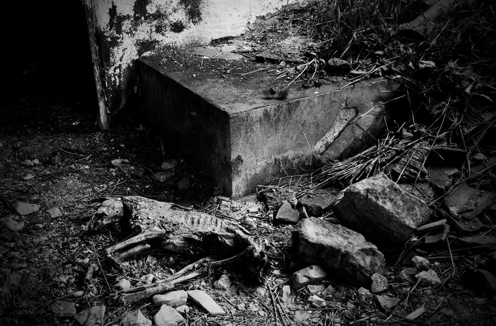 Photography image - Loading 2_david_arribas_cicatrices_scars.jpg