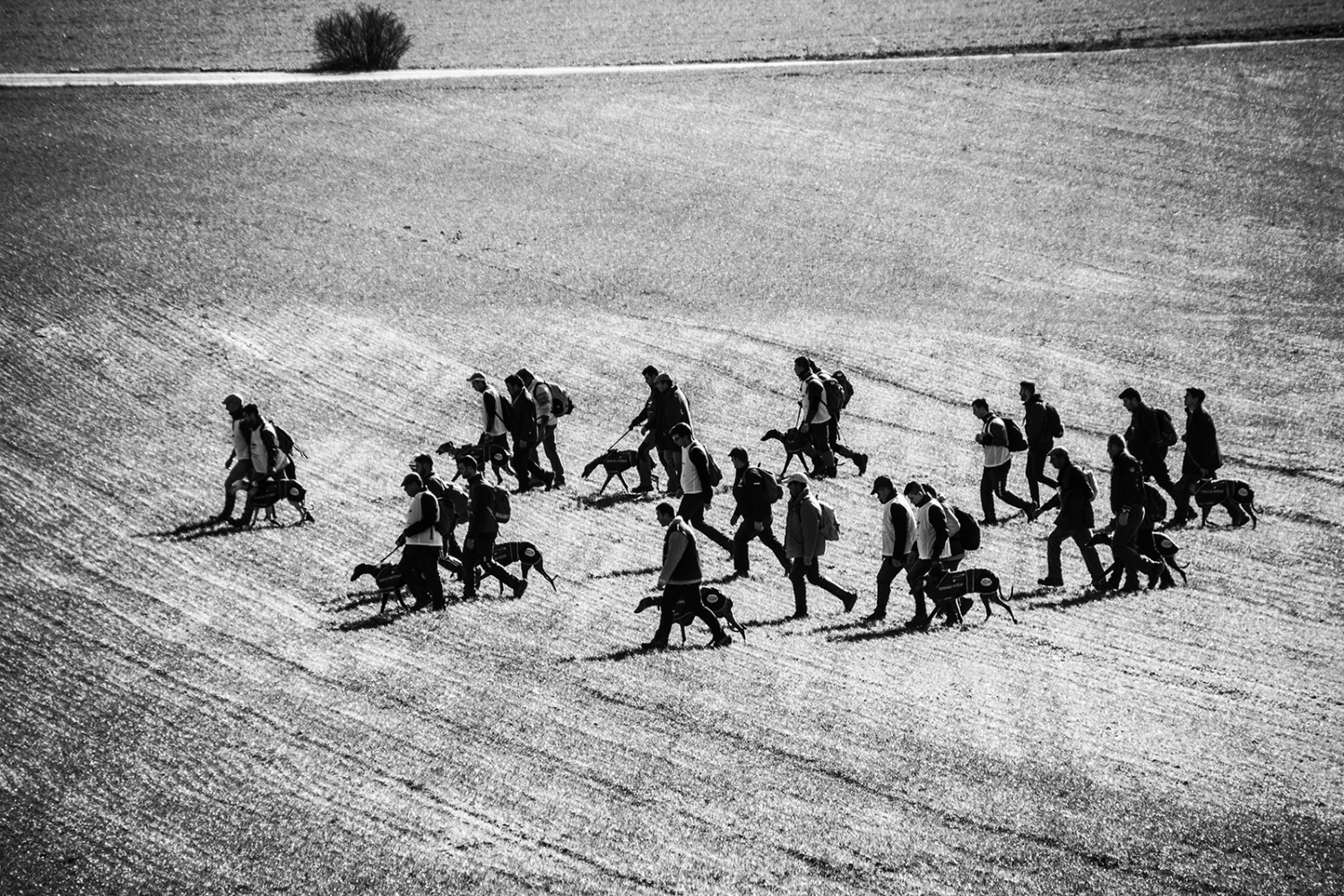Group of hunters during a hunting competition with greyhound. Valladolid, Castilla y León. Spain.