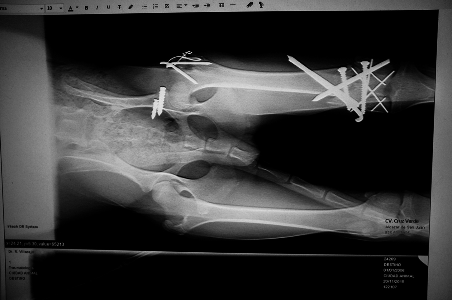 X ray test after an intervention to save a paw from multiple breaks.. Ciudad Real, Castilla la Mancha Spain.
