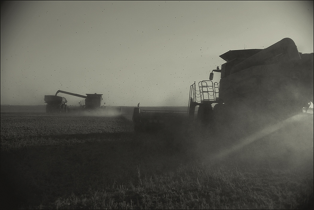 Harvest,Liberal, KS. October 2015.