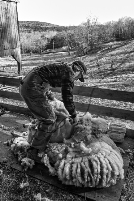 Photography image - Shearing ends