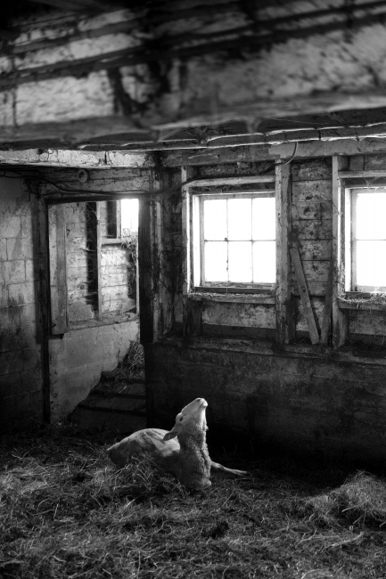 Photography image - Lambing begins