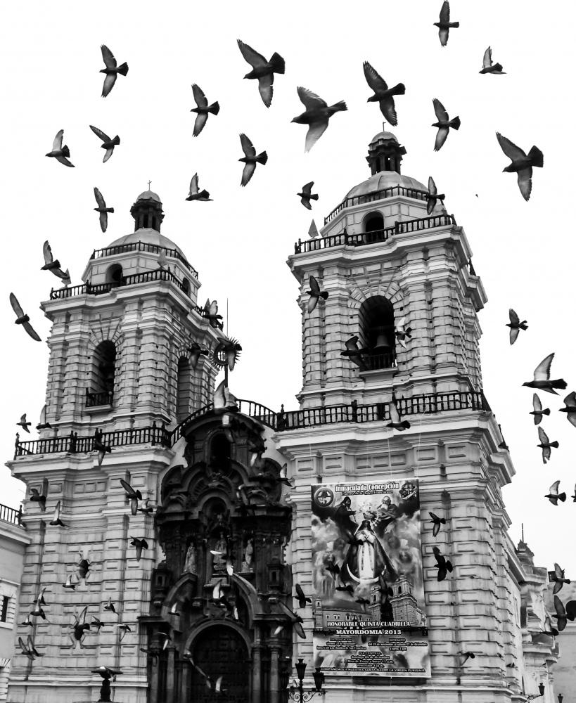 Peru, 2014 Birds