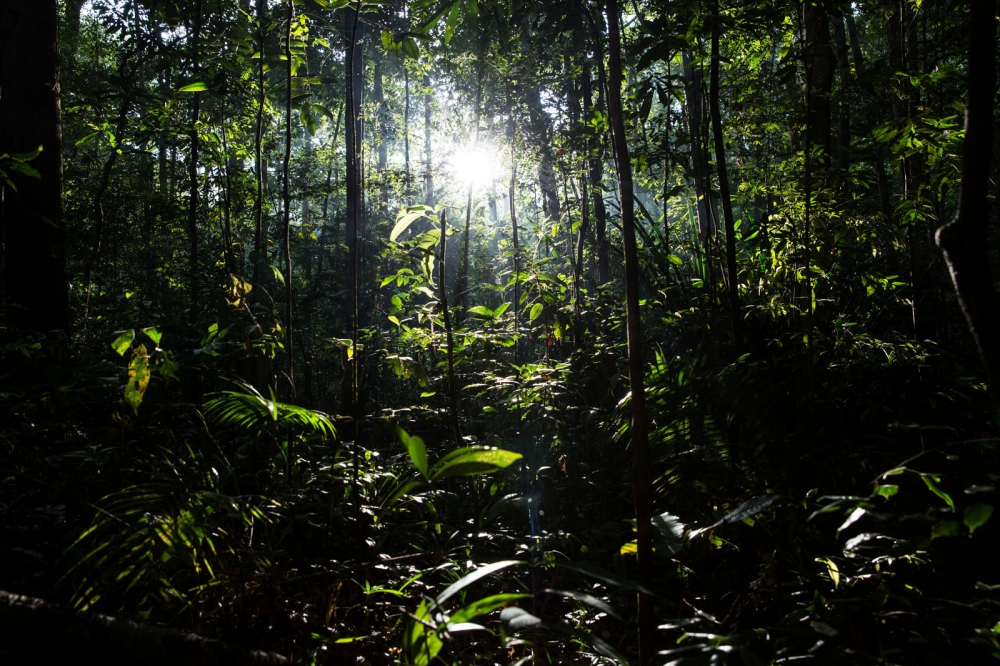 The dense jungle of the Banthat Mountains in Satun Province, Thailand. March 2017