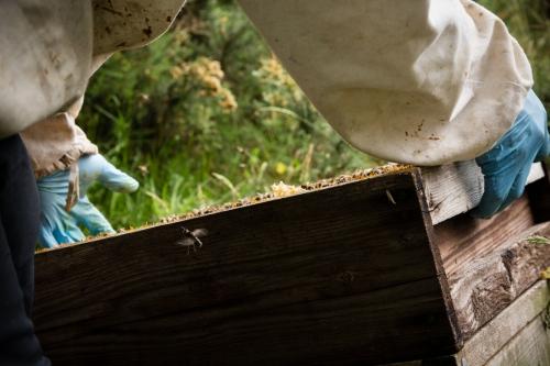 Irish Honey Bees