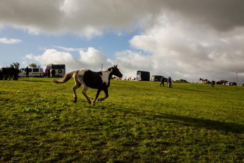 Horse Fair at Puck Fair
