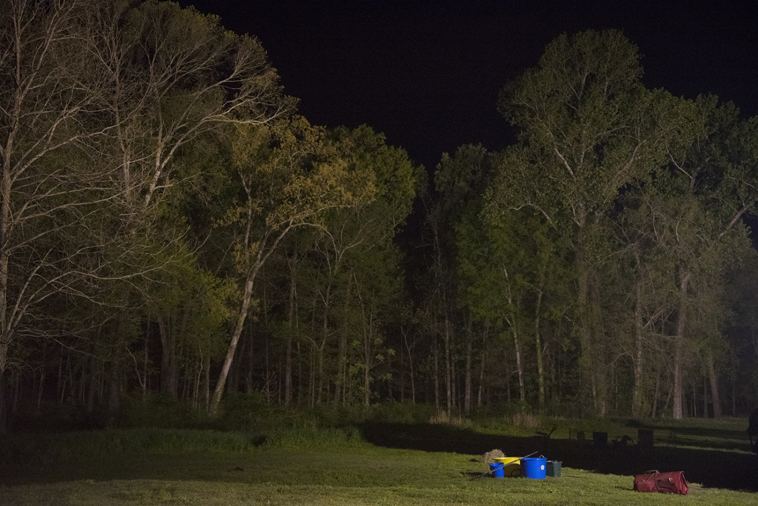 Art and Documentary Photography - Loading trees_at_night.jpg