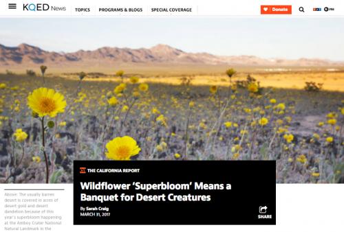 Desert Superbloom