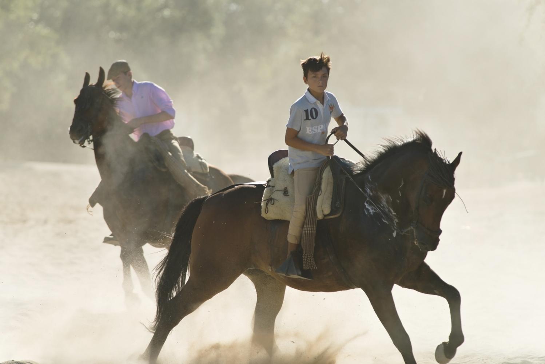 Art and Documentary Photography - Loading horses_visura.jpg