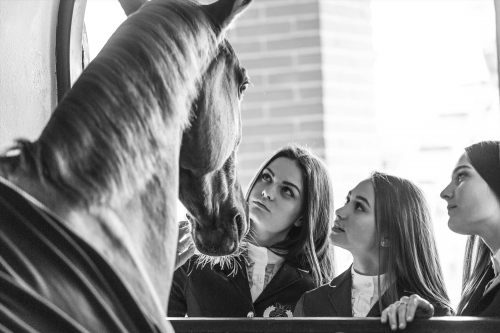 Fixdesign Horseriding web campaign 2017